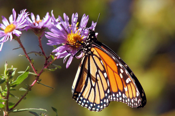 Butterflies-Lake-Atitlan-Guatemala