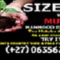 Call us about penis enlargement with mutuba seed Product +27635620092
